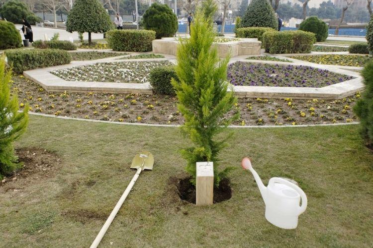 کدام درختان مناسب کاشت در تهران هستند؟/ مگس سفید را به پایتخت دعوت نکنید!