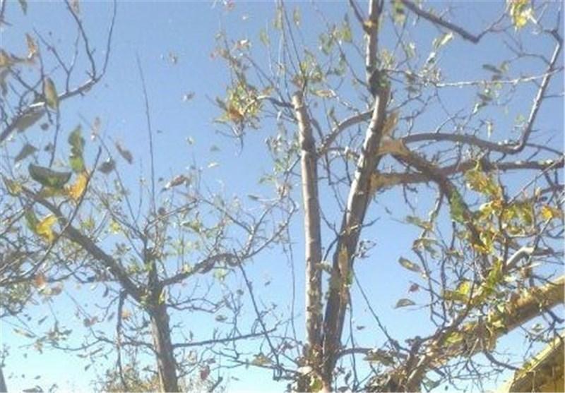 توقف ساخت و ساز در باغ الهیه با دستور قضایی