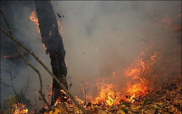 خطر آتشسوزی در جنگلهای شمال