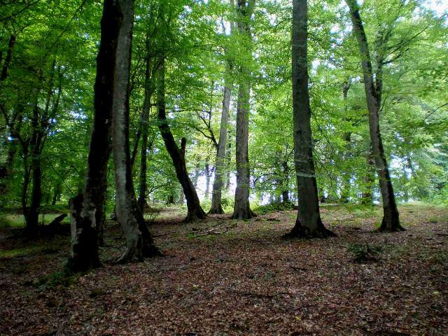 علت نابودی جنگل های شمال