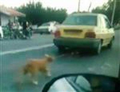 راننده تاکسی سگآزار محکوم شد
