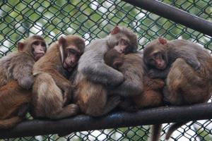 آخرین وضعیت سه باغوحش بدون مجوز پایتخت