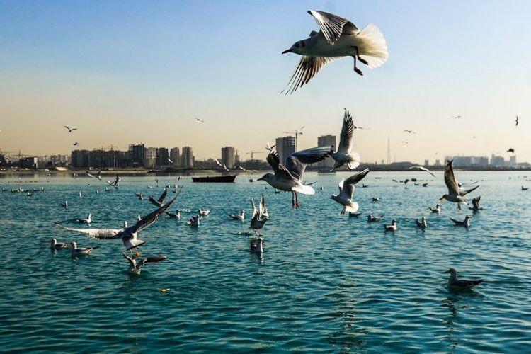 هشدار به پایتخت نشین ها؛ مشاهده 3 لاشه پرنده مبتلا به آنفلوانزای فوق حاد پرندگان در اطراف دریاچه چیتگر