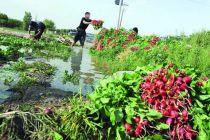 هشدار نگران کننده نماینده مجلس: آبیاری اراضی وسیع کشاورزی با فاضلاب شهری تهران
