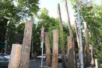 واکنش مدیرعامل سازمان بوستان ها و فضای سبز شهرداری به انتشار عکس قطع درختان خیابان ولیعصر